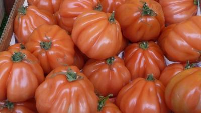 Tomates_Cœur_de_bœuf.jpg